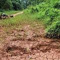 Elephant tracks
