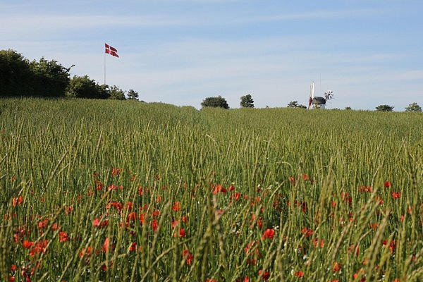 Denmark: fields with poppy flowers and windmills