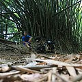 Bamboo break