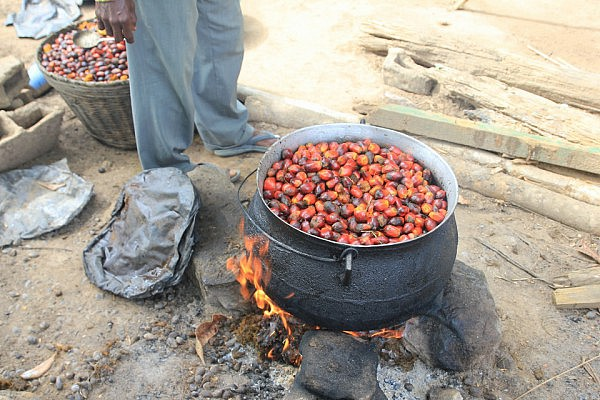 Boiling of oil palm fruit